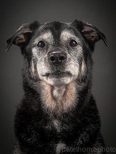 Inspiring photos of elderly dogs. BoredPanda