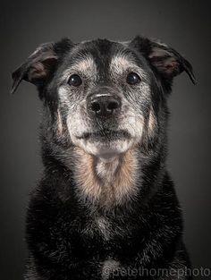 I love senior dogs. I wish everyone saw the value in them and would adopt!