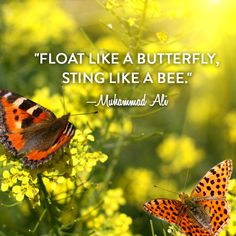 """""""Float like a butterfly, sting like a bee. Muhammad Ali Quotes, Sting Like A Bee, Float Like A Butterfly, Pure Simple, Motivational, Pure Products, Nature, Animals, Naturaleza"""