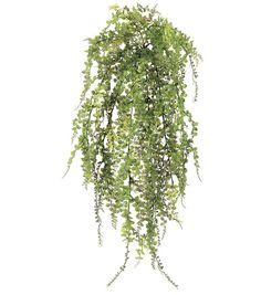 Petite Maidenhair Fern Bush, , hi-res