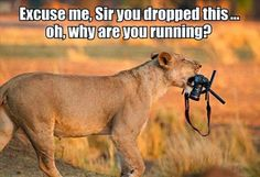 animal-pictures-with-captions-021-001.jpg 620×423 pixels