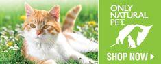 My Best Kidney Cat Food Guide | CeCe's Best Cat Food Guide for Kidney Disease