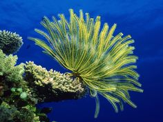 coral, corals, coral reef, reef, coralli, barriera corallina, under the sea, abissi, abiss, colour, wonderful, mare, oceano, ocean,