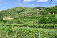 Wachau: Welterbesteig Etappe 1 – von Krems nach Dürnstein Vineyard, Outdoor, Vine Yard, Ruins, Hiking, Outdoors, Vineyard Vines, Outdoor Games, The Great Outdoors