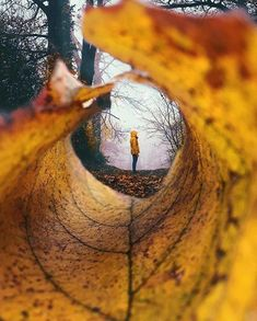 A seasonal leaf's perspective Photo by @salufi @polaroiduniversity . Want to learn #smartphone #photographytips from the pros? Join @community of #photographers today. #InsprMe #nature #naturephotography #winter #leaf #polaroid #photography #PolaroidU #environment #naturephotography #earth #leaf #fall #forest #yellow #peace