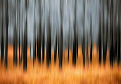 Trunks of dead conifers near Torridon village, Scotland. The trees were destroyed in a wild fire in Movement Photography, Fire Photography, Abstract Photography, Creative Photography, Landscape Photography, Abstract Nature, Abstract Images, Abstract Art, Abstract Paintings