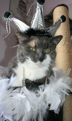 Some cats look miffed when dressed up. This one looks like it was born to wear this outfit.