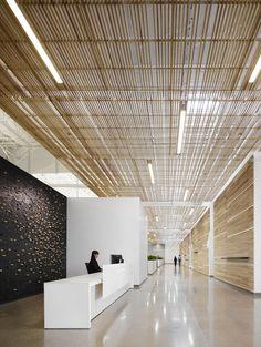 "FSC-certified ash bordering ""main avenue"" of modern design center."