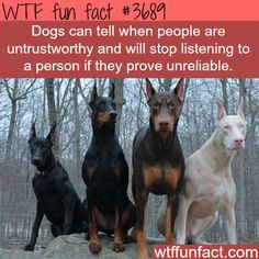 Dogs won't trust you if you prove unreliable & WTF fun facts animals facts & WTF Facts Source by teresalaijy The post animals facts & WTF Facts appeared first on Dogs GP. Wierd Facts, Wow Facts, Wtf Fun Facts, Funny Facts, Random Facts, Strange Facts, Funny Animals, Cute Animals, Smart Animals