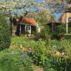"91 To se mi líbí, 16 komentářů – @sus_jacobi na Instagramu: ""One more beautiful morning in the #springgarden  #cottagegarden  #maj  #forårshaven"""