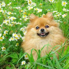 "@irina_exploringtheglobe: ""My dog Gabriella  | CC @exploringtheglobe Tag #exploringtheglobe and @artnetinstagram Tag #artnetinstagram"""