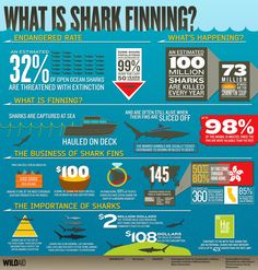 Shark finning, it's devestating the shark population, but what is shark finning? Check out this infographic.  #sharkweek