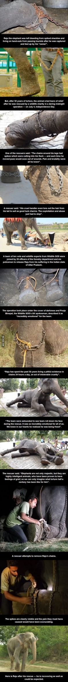This elephant was freed after he was held in spiked shackles for 50 years. He cried when he was finally liberated…