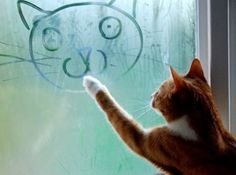 kitty loves his art time....