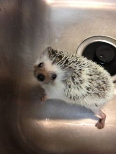 Hedgehog, I might. Get one, been up all night researching!!! Enli, or Lucy for a girl and for a boy, blue, or quils