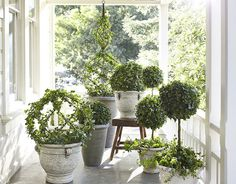The Enchanted Home: love all of these in white planters