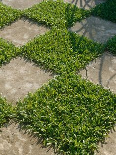 Create a Checkerboard Garden  This simple design of paving stones and plants can be used to create a dramatic courtyard or a fun space for children. Plant it up with turfgrass, chamomile or low-growing herbs, such as thyme.