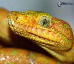 Auge der Schlange