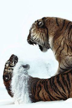 motivationsforlife: Snow fight by Paul Keates