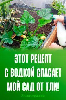 Vegetable Garden Design, Home And Garden, Vegetables, Sodas, Tomatoes, Botany, Vegetable Recipes, Veggies