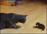 ARTistic Cat GIF with caption • Cutest BOOP ever Mama Cat and her tiny Kitten falling on floor