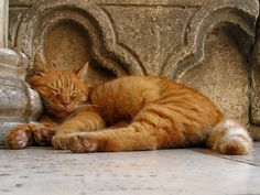 """""""If homeless cats could talk, they would probably say, give me shelter, food, companionship, and love, and I'll be yours forever."""" --Susan Easterly"""