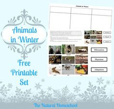 Our Animals in Winter Migration, Hibernation & Adaptation post is an introduction to the three with activities, printables and ideas! Preschool Science, Science Activities, Baby Activities, Preschool Themes, Science Ideas, Indoor Activities, Animals That Hibernate, Animal Adaptations, Tot School