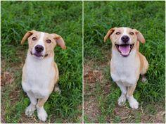 adoptable dog photography tips1 photo #BTC4A