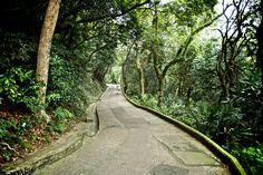 Walking to Hong Kong city on the Old Peak road from Victoria Peak