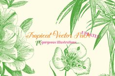 Tropical Vector Pack by Marin Shadok on Creative Market