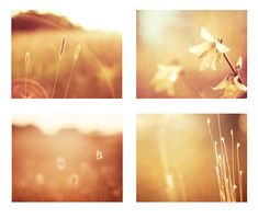 Gold Print Set  Four 11x14 8x10 Photographs  by CarolynCochrane, $48.00