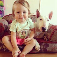 Jack! #bullterrier #kids #dogs