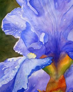 PURPLE IRIS -Giclee Print of Original Watercolor Painting