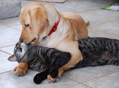 It's okay, I've got you.