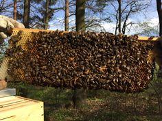 Natural Bees hive