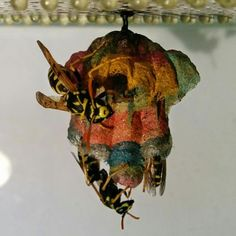 This Rainbow Wasp Nest Was Built With Colored Paper Wasp Nest, Yellow Paper, Find Color, Colored Paper, Great Photos, Rainbow Colors, The Incredibles, Nests, Mother Earth