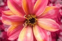 Amazing flower wide