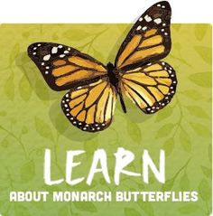 Learn more about the Monarch Butterfly! Tips to planting a Monarch friendly garden