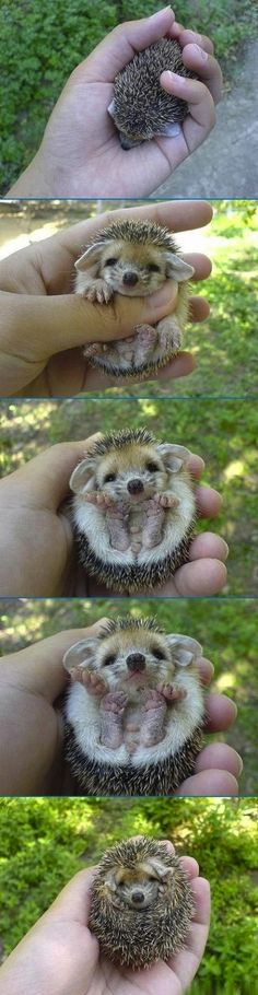 . I CAN'T STOP SQUEALING LIKE A LITTLE GIRL OVER HOW CUTE THIS IS!!!
