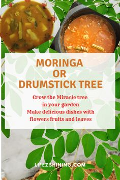 Moringa or drumstick tree for gardens, grow the miracle tree - Lifezshining Fast Growing Plants, Growing Tree, Simple Recipes, Healthy Recipes, Miracle Tree, Moringa Leaves, Drought Resistant Plants, Different Types Of Vegetables, Kerala Food