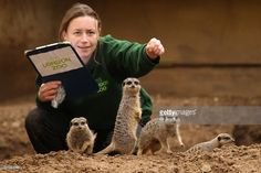 Zoo keeper Angela Ryan makes note of the meerkats as she conducts ZSL London Zoo's annual stocktake on January 1, 2011 in London, England. London Zoo is home to over 16,000 animals from over 700 different species including over 10,000 invertebrates, 4,700 fish and 100 reptiles.