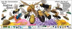 Join the Conversation about Native Bees