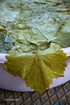 Cabbage, Plant Leaves, Vegetables, Plants, Food, Essen, Cabbages, Vegetable Recipes, Meals