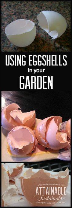 Eggshells are a great addition to your gardening plans. Here's how to incorporate them to boost soil, deter pests, and (hopefully!) increase yields.