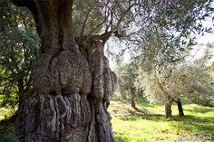 Sabina, the land where Sabina PDO Extra Virgin Olive Oil is produced