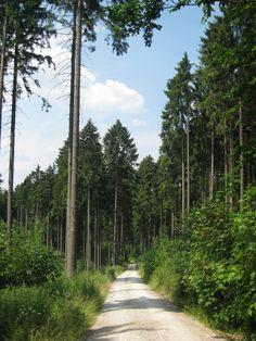 Woodland- Bielefeld, Germany.