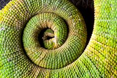 Reptile Tail