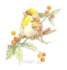 Berry Perch 5 x 4.75 watercolor by CShoresInc on Etsy