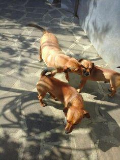 La cucciola, Dylan e Zeus