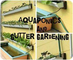 How to set up an aquaponics gutter - Image:  aquaponics
